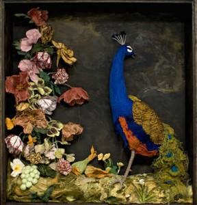 lindsay Taylor peacock